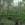 Sattes Grün nach regnerischen Tagen bestimmt das sommerlich Moor.
